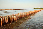 01 MAY 2010 - SAMUT SAKHON, THAILAND: A bamboo sea wall in Samut Sakhon. The wall doesn't actually hold the sea back, but it blunts the force of waves slamming into the shore and slow the rising sea level in the area. The bamboo sea wall is being used in connection with mangrove replanting to claim land lost to rising seal levels.  PHOTO BY JACK KURTZ
