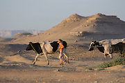 A local girl herds cows through a desert landscape in Dakhla Oasis in the Western Desert, Egypt. The Western Desert covers an area of some 700,000 km2, thereby accounting for around two-thirds of Egypt's total land area. Dakhla Oasis is one of the seven oases of Egypt's Western Desert (part of the Libyan Desert). It lies in the New Valley Governorate, 350 km (220 mi.) and measures approximately 80 km (50 mi) from east to west and 25 km (16 mi) from north to south.