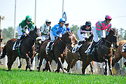 27 March 2010 : The field passes the wire for the first time in the training flat race at the Carolina Cup.