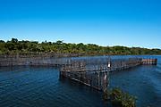 Artesanal fish trap<br /> Eastern Madagascar<br /> MADAGASCAR<br /> grain farmer