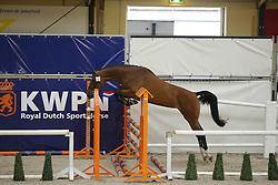 095 - Gracieuza H<br /> Vrijspringen 3 jarige Merries<br /> KWPN Paardendagen - Ermelo 2014<br /> © Dirk Caremans