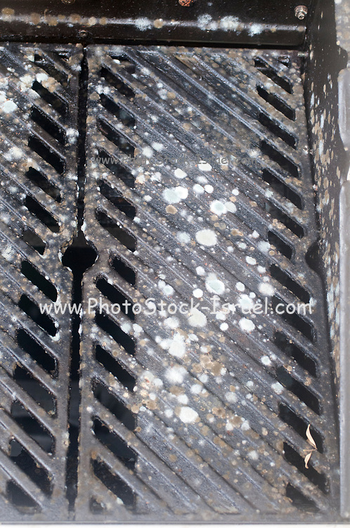 Mould grows on a gas barbecue