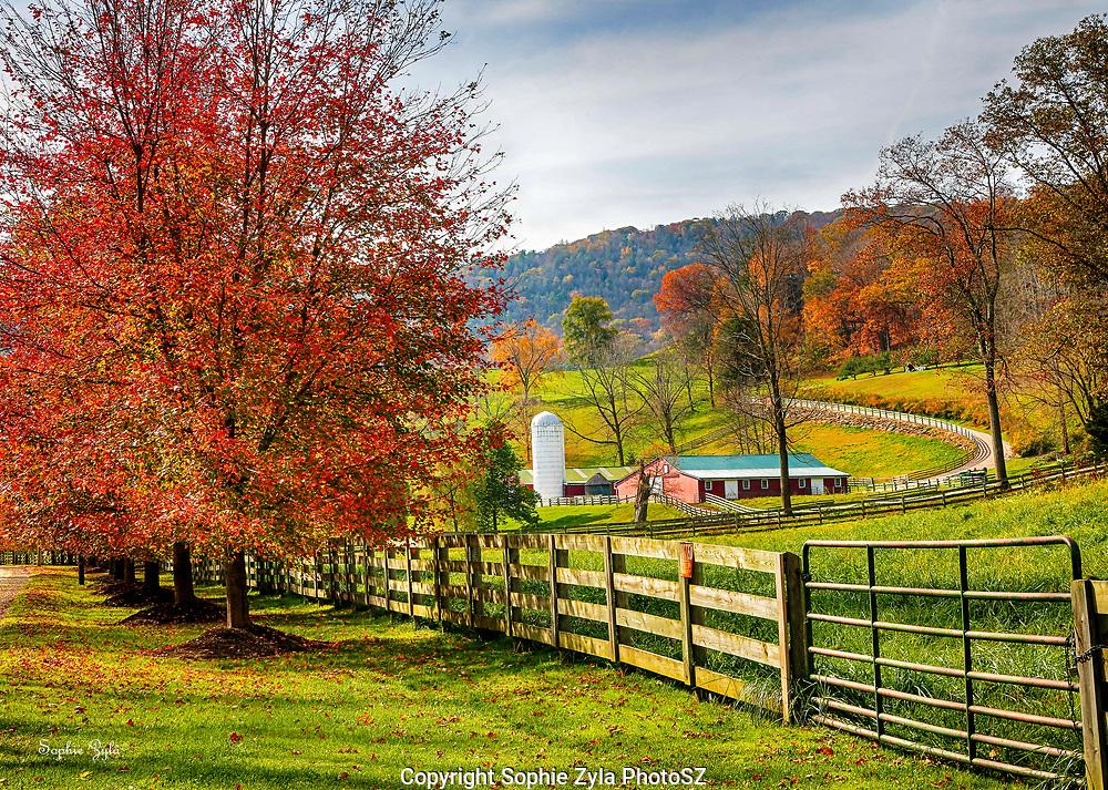 Litchfield County Farm Foliage