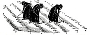 Crop Rotation: Women thinning turnips. In Norfolk 4-course system, wheat planted first year, followed by turnips, then barley, often underplanted with grass or grass and clover ley to be used for hay or grazing in 4th year. Engraving 1855