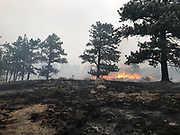 The East Troublesome Fire burns north of Moraine Park in Rocky Mountain National Park, October 24, 2020. © 2020 William A. Cotton