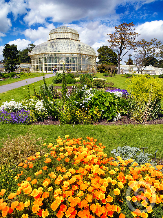 Photographer: Chris Hill, Botanic Gardens, Dublin