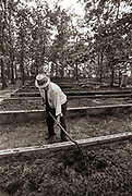 """Alton Carter, Uncle of President Jimmy Carter at Work at His Worm Farm. Alton Carter, President Carter's uncle and the former mayor of Plains, Ga., works tending the soil bed that were home to earthworms and nightcrawlers  at his worm farm, just outside of Plains.<br /> <br /> Alton Carter was born in Arlington, Ga. When he was 15 years old, he moved his mother, two sisters, and his younger brother, James Earl Carter, father of the President, to Plains from Rowens, Ga. James Earl Carter died in 1953, and Alton, according to members of the family, became somewhat like a second father to President Carter.<br /> <br /> <br /> <br /> Alton Carter was also mayor of Plains, Georgia - the President's hometown - for 28 years, and a Sumter County commissioner for seven years.<br /> <br /> He operated a general store in Plains from 1909 until 1971. After selling the business, Carter continued to work with his son, State Sen. Hugh Carter, in the Carter Antique Shop in Plains. <br /> <br /> President Carter was described as being """"very close"""" to his uncle."""