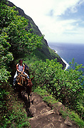 Molokai Mule Ride, Kalaupapa, Molokai, Hawaii, USA<br />