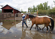 """NEWS&GUIDE PHOTO / PRICE CHAMBERS.Ranch Foreman Scott Putnam leads his horses Joker and Dick through a flooded coral at the Sewell Ranch on Tuesday as the Snake River threatens to spill over its banks. """"I've never seen the river that high,"""" said Putnam who has been working on the cattle ranch 13 years. """"Normally this time of year these trails are dusty."""" Flash flood warnings were issued when snow melt began combining with rain in the valley."""