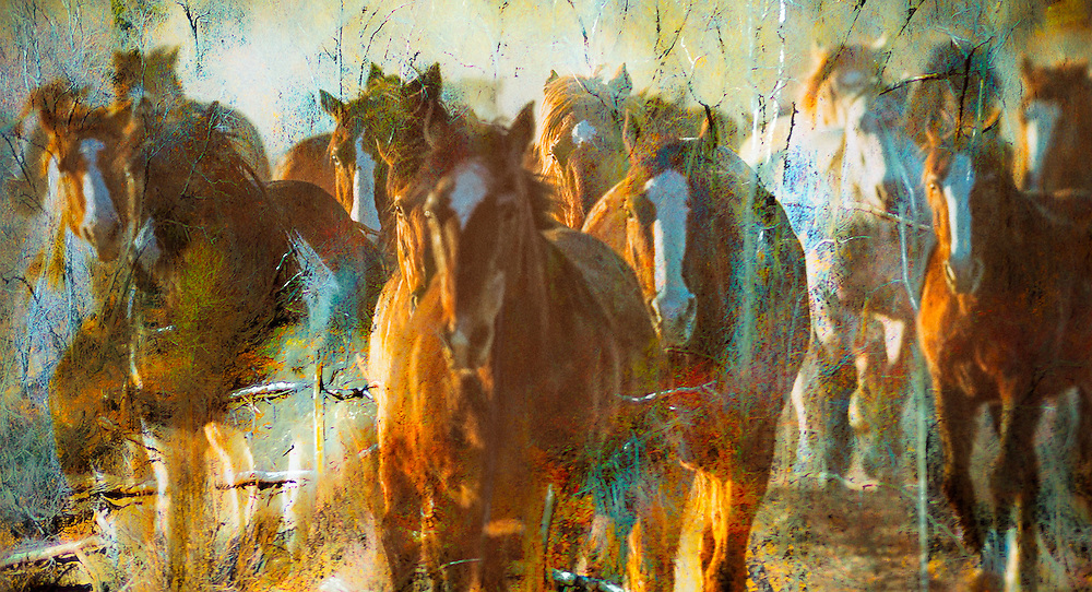 NEW Works by Craig W. Cutler Fine Art / DesignLIFE. <br /> <br /> Drama and Beauty, Light and Texture, all artistically conveyed in this HIGHLY-LIMITED Equestrian and Nature edition of Fine Art artworks.  <br /> <br /> Shot with Canon & Leica bodies and lenses, these are Craig Cutler's latest American West artworks.