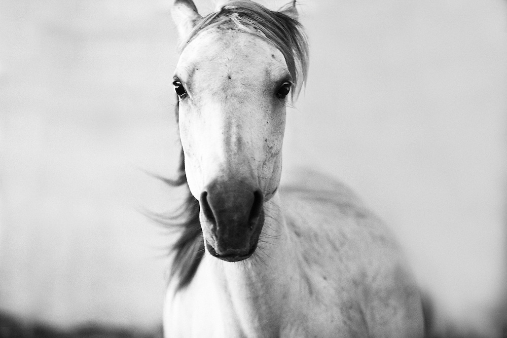 Persistence, Tracie Spence photographed a wild mustang running directly at her.  She was able to capture the spirit and emotions of this horse with her 300mm cannon lens,