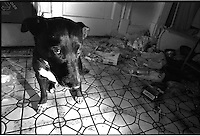 Still life with garbage and bad dog, Mica, Bucktown, Chicago, 1995