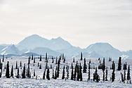 Denali from Broad Pass