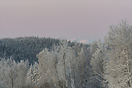 Cold winter days, trees covered in frost, distant mountains covered in snow.