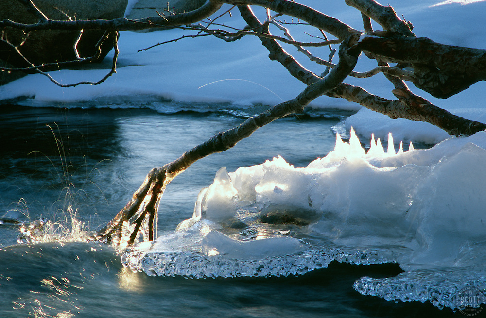 """""""Iced Branch at Eagle Falls""""- This iced over branch was photographed at Eagle Falls, above Emerald Bay, CA<br /> Photographed: January 2006"""
