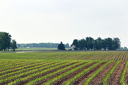 A cornfield sprouts in the spring in central Illinois