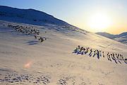 Reindeer herding in the Mid-Norway mountains of Sylene.