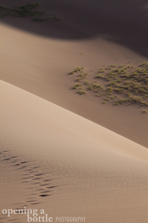Dune grass and shadow and footprints, Great Sand Dunes National Park, Colorado.
