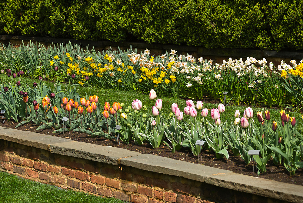Flowers, Agecroft Hall tudor estate and gardens, Richmond, Virginia USA