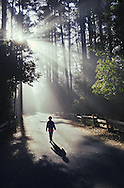 Allison walks back to camp at McKerricher State Park as morning sun filters through the fog and trees.  August, 1995.  © Jay Mather