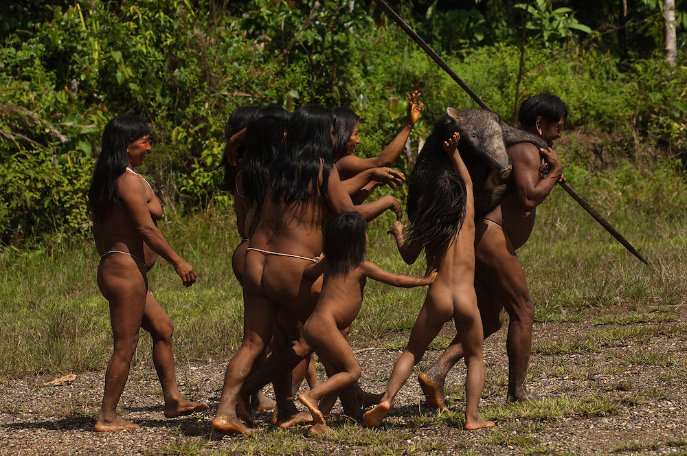 Huaorani Indian, Meñewa Wane carrying home a White-lipped peccary that he hunted with his lance. The lances are made from the Chonta palm trunks. The women and children are each petting the peccary as they pay homage to the hunted animal.<br /> Bameno Community. Yasuni National Park.<br /> Amazon rainforest, ECUADOR.  South America<br /> This Indian tribe were basically uncontacted until 1956 when missionaries from the Summer Institute of Linguistics made contact with them. However there are still some groups from the tribe that remain uncontacted.  They are known as the Tagaeri & Taromenane. Traditionally these Indians were very hostile and killed many people who tried to enter into their territory. Their territory is in the Yasuni National Park which is now also being exploited for oil.