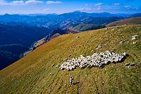 France, Pyrénées-Atlantiques (64), Pays Basque, Pays Quint, Mizu Monaco, berger et producteur de fromages Ossau-Iraty // France, Pyrénées-Atlantiques (64), Basque Country, Quint Country, Mizu Monaco, shepherd and producer of Ossau-Iraty cheeses