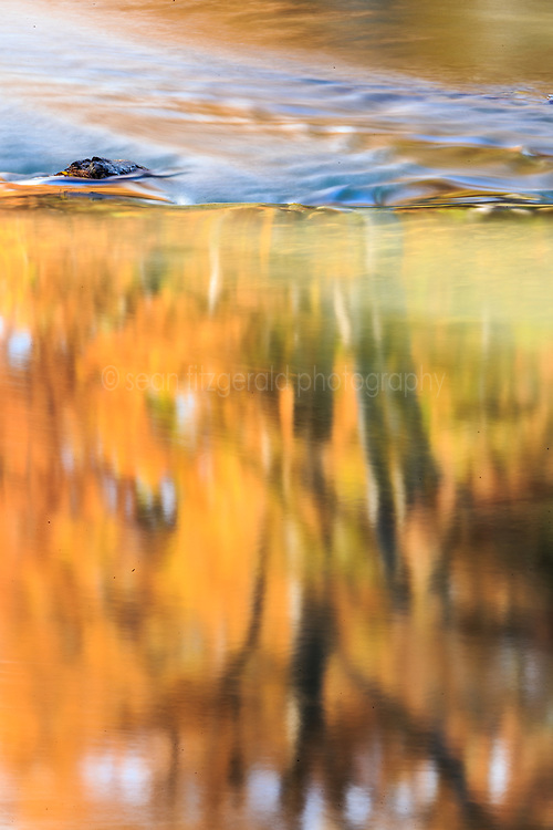 Reflections of trees in fall color, James Kiehl River Bend Park, Guadalupe River near Comfort, Texas USA