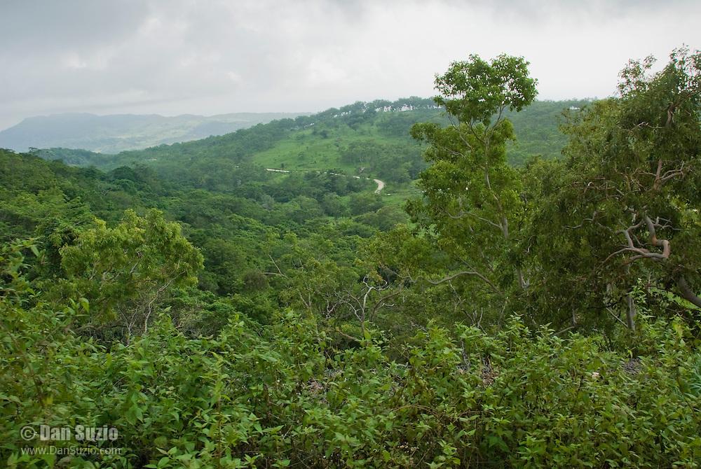 Coastal forest on the lower slopes of Mount Manucoco, Atauro Island, Timor-Leste (East Timor)
