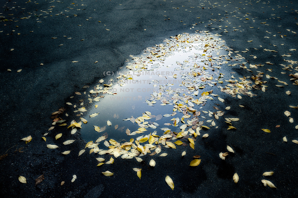 Image detail of fall leaves after rain near Seattle, Washington, Pacific Northwest by Randy Wells