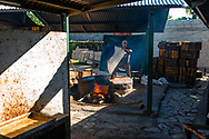 A worker adds sugar to the guava-sugar mixture over heat during the process of making Guyaba bars (Florida, Camagüay Province, Cuba).