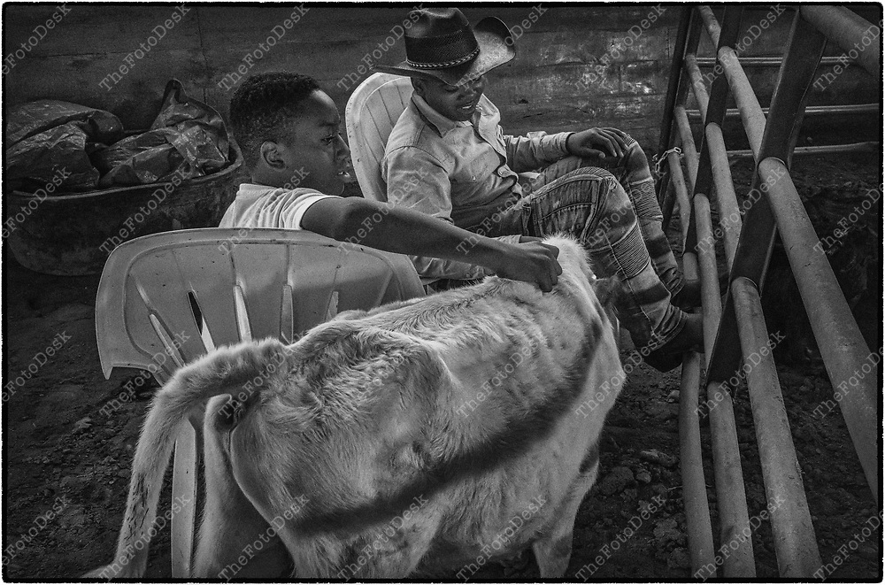 FLEMINGTON, NEW JERSY: Lavar Nowell, and Damere Beverly keep an eye on the cattle during a cowboy celebration in Flemington, NJ on Saturday, August 28, 2021.  The celebration featured team sorting, horseback riding and a cookout.    (Brian Branch-Price/TheFotoDesk)