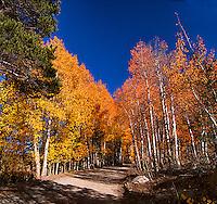 Eastern Sierra CA
