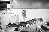 A fishmonger holds a massive tiger-striped fish at the old covered market in Manaus, Amazonia, Brazil. Photo by Andrew Tobin/Tobinators Ltd