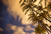 Coconut Palm Trees at night with Milky Way, Oahu, Hawaii