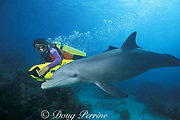 Michele Hall uses an underwater scooter to swim with Honey, a wild sociable bottlenose dolphin, or ambassador dolphin, Tursiops truncatus, Lighthouse Reef Atoll, Belize, Central America ( Caribbean Sea )
