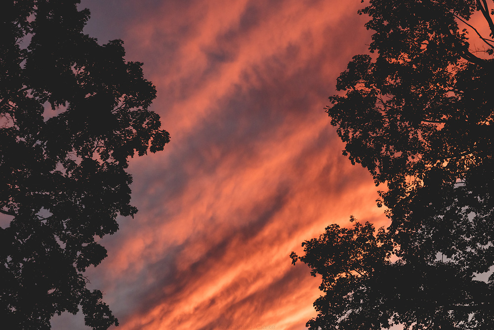 A vibrant sunset seen through silhouetted maple trees in Lexington.