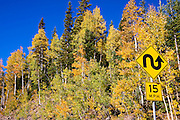 Fall aspens and windy road sign on Red Mountain Pass, Uncompahgre National Forest, Colorado USA