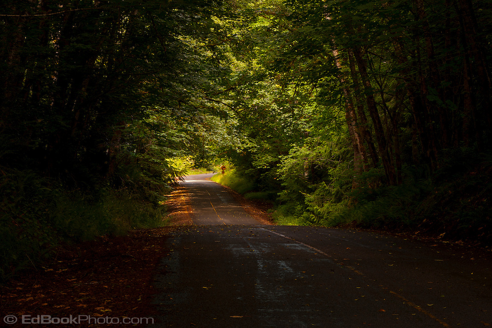 light from above gives a glow to the end of a tunnel of trees over a country lane in rural Kitsap County on the Kitsap Peninsula in Puget Sound, Washington, USA