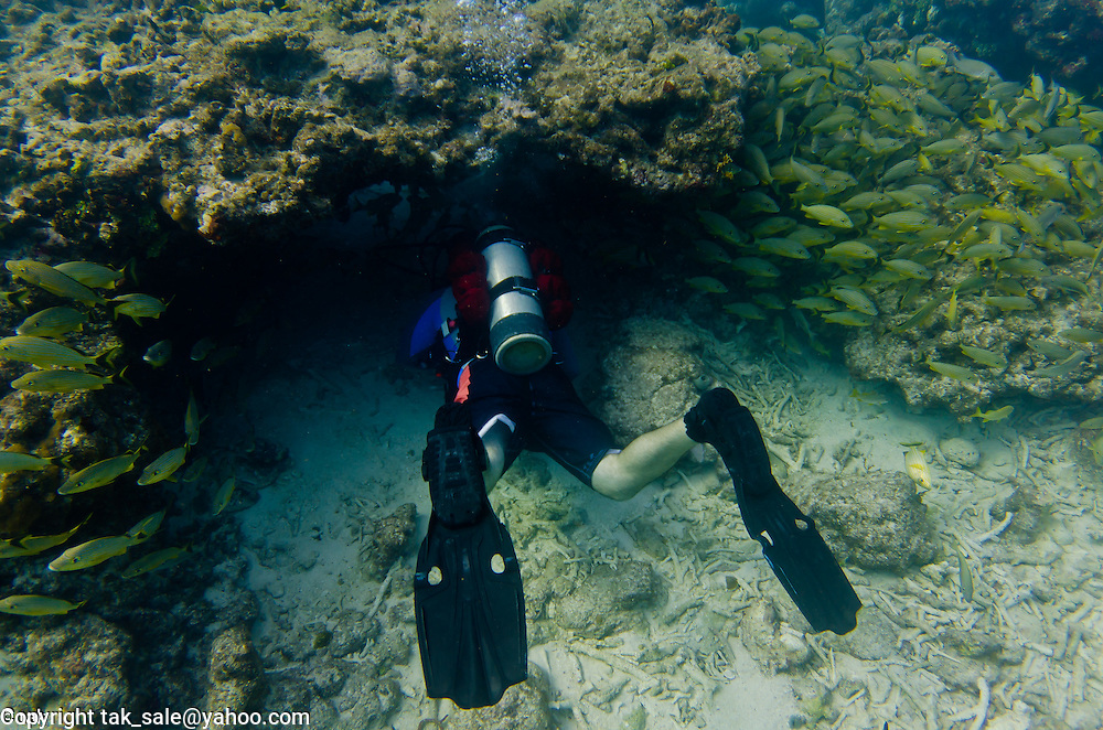 Underwater photography - beautiful seascape and sealife captured while diving in Key Largo, FL.