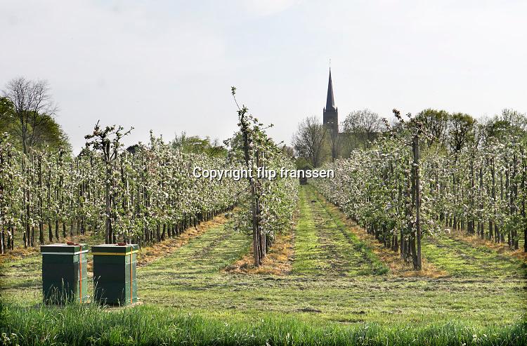 Nederland, Batenburg, 17-4-2020  Een bomgaard staat in bloei . Er zijn bijenkasten geplaatst zodat de bijen de bloesem gaan bevruchten .Foto: Flip Franssen