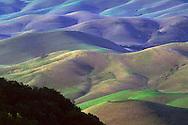 Rolling hills of grass pasturelands in spring, Tassajara Region, Contra Costa County, CALIFORNIA