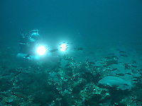 Deep Worker Submersible Exploring a Reef off the coast of Texas.
