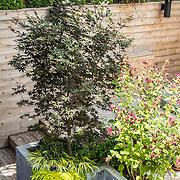 Chef's Garden Retreat