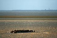 Hoogwater Noorderleeg - Reddingsactie paarden in Marrum