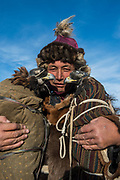 Golden eagle wearing coat and ready to travel by vehicle<br /> Golden Eagle Festival<br /> in Bayan Olgii province<br /> Western Mongolia