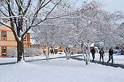 Winter Snow, Berks Co., PA Scene Penn State University, Berks Campus