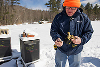 Jeff McCormack picks up a bee that had just left the hive.  Bees leave the hive before they die as shown by the dozens of bees lying in the snow surrounding the supers.  (Karen Bobotas/for the Laconia Daily Sun)
