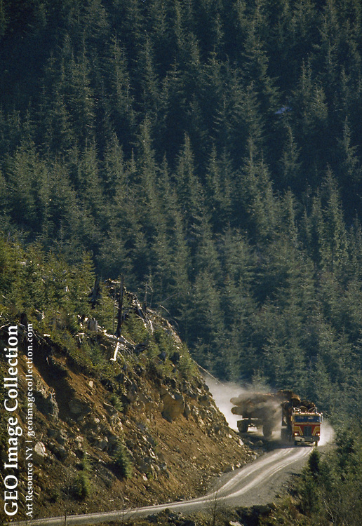 A log truck carries old growth logs down a mountain.