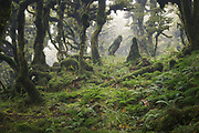 Moss and fog covered cloud forest in Tararua Forest Park, New Zealand Ⓒ Davis Ulands | davisulands.com