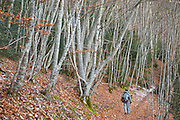 Parmenter Welty walks along a forest trail on the Col de Pennes in the Diois, Drôme Valley, France.